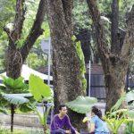 2 — Une ville plus humaine : Joko Widodo, en son temps gouverneur de Jakarta et président du pays depuis peu, avait pour volonté de couvrir la ville d'espaces verts (ici le parc Suropati, dans le quartier chic de Menteng).