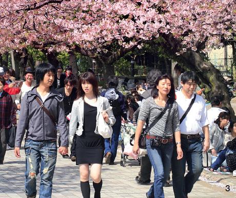 3 — Au début du mois d'avril, le parc d'Uneo est le lieu privilégié pour admirer les cerisiers en feur. Mais il fait bon fâner en toute saison dans ce vaste jardin qui accueille aussi le musée national.