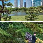 En plein quartier de Shiodome, les jardins d'Hama-rikyu datent de 1654. Mais le vert à Tokyo n'est pas que de l'histoire ancienne, les murs végétaux poussant ça et là.