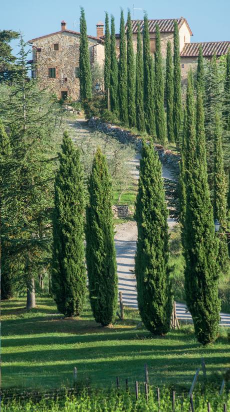 4 — Les routes de Toscane ombragées de cyprès longilignes : une image de carte postale illustrant la douceur de vivre presque inchangée depuis la Renaissance comme en témoignent certaines fresques.