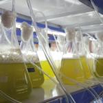 De la canne à sucre, de la betterave, des algues : le secteur teste les meilleures recettes de biofuel.