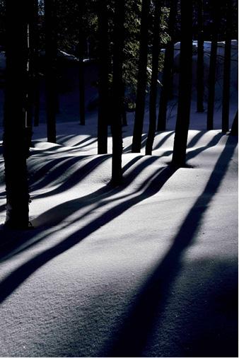 Le soir tombant, les sous-bois en clair obscur, douillettement duvetés, renferment silencieusement les mystères de la forêt boréale.