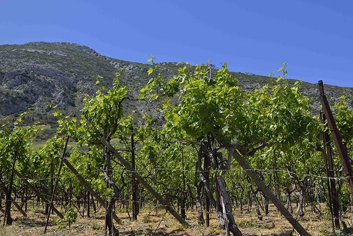 La Crète, environs de knossos
