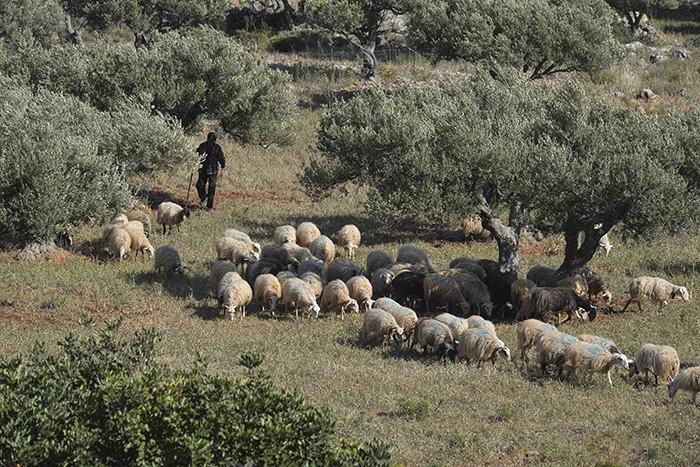 La Crète, presqu'île d' Akrotiri