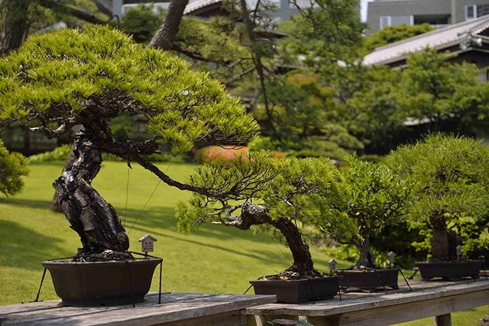 En plein Tokyo, le jardin Happo-En dessine en miniature une nature idéale, interprétée avec un exquis raffinement.