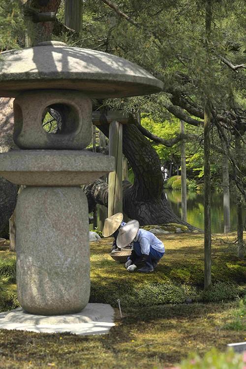 À Kanazawa, des jardinières apportent un soin particulier aux parterres de mousse du Kenroku-en, un des plus beaux jardins du pays.