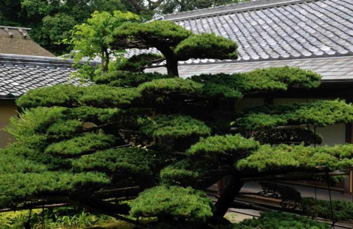 Des pins taillés symbolisant la longétivité, l'érable pour le temps qui passe, le cerisier et l'éphémère : les jardins japonais manient avec art le fond et la forme.