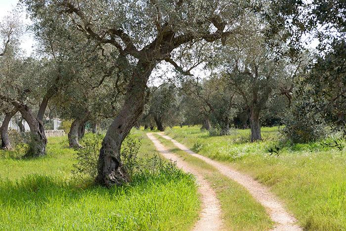 Une balade à vélo au gré des chemins de traverse, et c'est  un air de dolce vita le temps d'un pique-nique sous les oliviers.