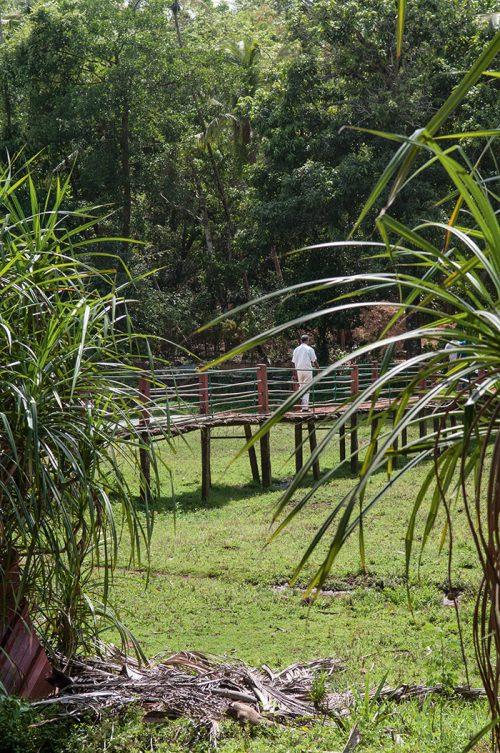 goa-déjeuner à la plantation Tropical