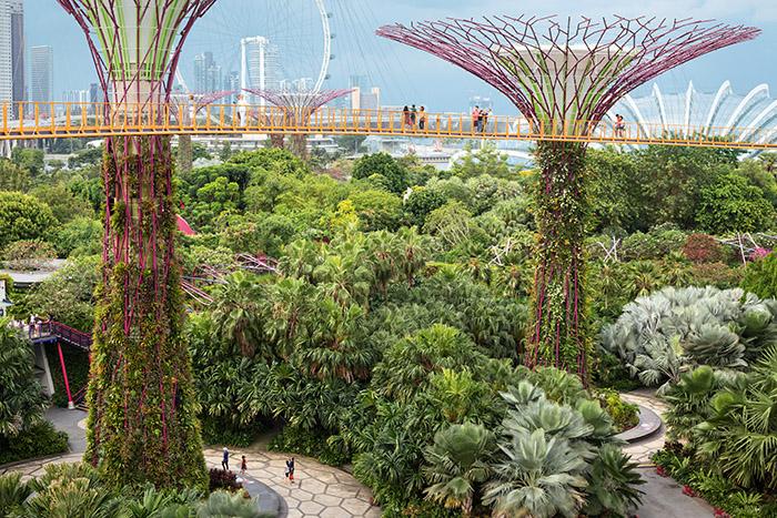 La canopée futuriste des Gardens by the Bay dessine les contours d'une métropole durable. © Ludovic Maisant