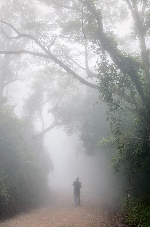 """Humidité, chaleur, altitude : la """"forêt de nuages"""" de Monteverde se pare en quasi permanence d'un profond brouillard."""