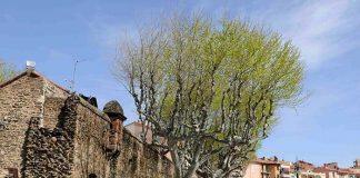 Occitanie Collioure