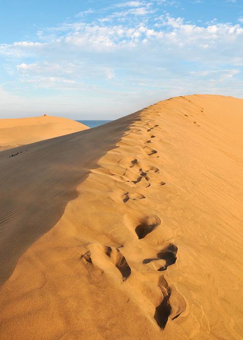 Du sable blond à perte de vue, des mamelons d'une délicate beauté étendus le long de l'océan : les dunes de Maspalomas ondulent sur huit kilomètres, juste à côté de la playa del Ingles.