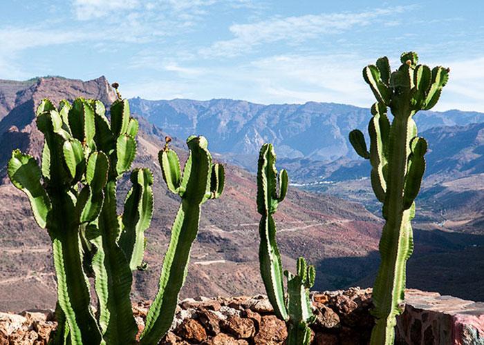Des paysages à la John Ford, des canyons à en rendre jaloux l'Arizona, une végétation endémique de cactus, d'euphorbes et de figuiers de barbarie : le barranco – la vallée en dialecte canarien – de Fataga offre le spectacle saisissant d'une nature à l'état brut, mâtinée d'oasis et de petits villages authentiques.