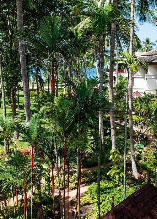 Look d'Eden Paradise sur fond de mer d'Andaman. Les grands resorts installés en bord de plage n'économisent pas leur talent pour paysager des jardins extraordinaires. Le matin, on s'y amuse des oiseaux en maraude. Le soir, à la fraîche, on les sillonne gentiment à bicyclette. Ici, l'hôtel JW Marriott.