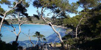 Sur l'île de Porquerolles, la plage Notre-Dame, élue plus belle plage d'Europe, s'offre en récompense au bout de sentiers bordés d'oliviers, de cistes et d'arbousiers.