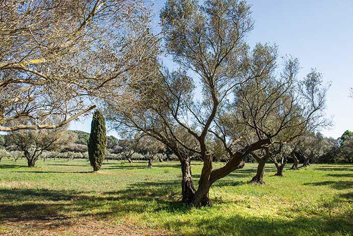 """Des oliviers, des pins, des chênes, mais aussi des cyprès, de la myrte : les îles de Port-Cros et Porquerolles (en photo) déclinent toutes les essences méditerranéennes. Des """"îles d'Or"""" très nature qui préservent avec attention ce conservatoire."""
