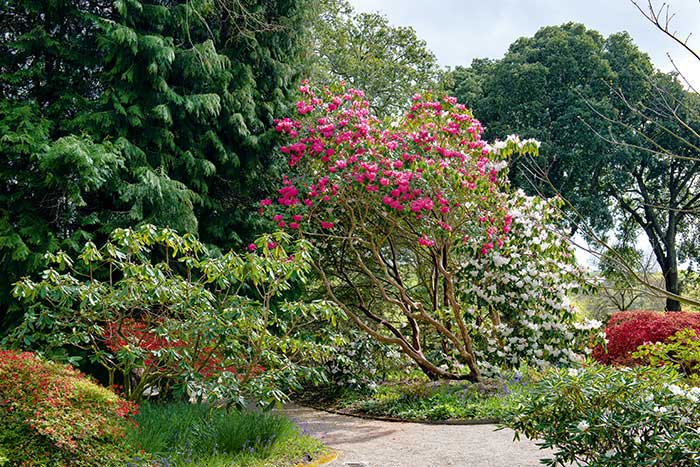 Jardin Trelissick