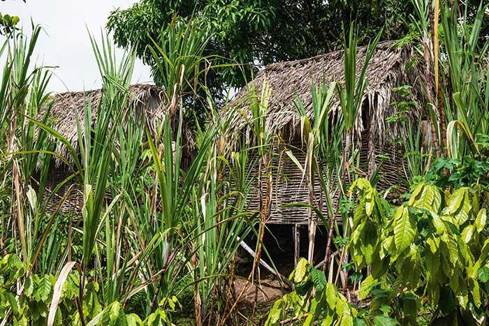 Rue Case-Nègre, habitations traditionnelles, évocation de l'ère amérindienne : à travers la Savane des esclaves, Gilbert Larose témoigne du douloureux passé de la Martinique. Une ?œuvre de mémoire.
