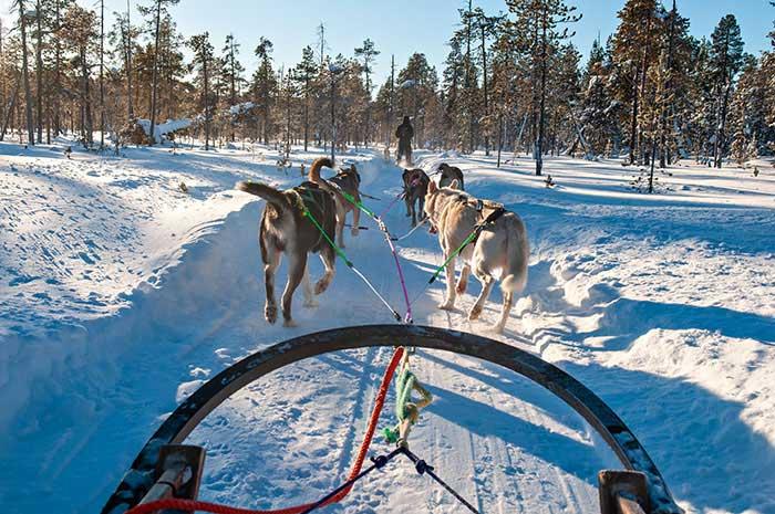 Cinq par traîneau, les huskies filent joyeusement à travers la toundra glacée. Un défoulement qu'ils attendent avec impatience, mais une fois lancés dans leur effort, c'est dans le plus grand calme que les voyageurs s'avancent dans les chemins blanchis, contemplant en silence le grand spectacle de l'hiver.
