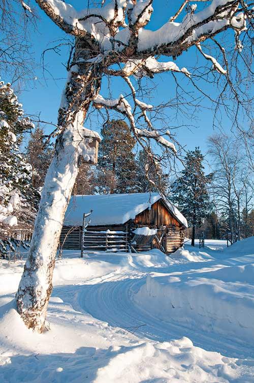 Des rennes en liberté, une ferme comme autrefois : de nombreux lieux d'élevage présentent in situ cet animal central du mode de vie des Samis. à l'opposé des stations de ski-usines que nous connaissons, voici de la vraie neige avec des paysages intacts, des fermes authentiques et des fermiers restés très proches de la nature.
