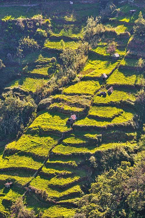 Une terre volcanique fertile, mais des pentes escarpées : la culture des bananes et de la vigne s'est organisée en terrasses, l'intérieur de l'île étant couvert d'une succession de restanques verdoyantes.